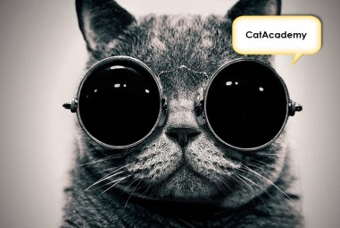 Learn Spanish Using Cat Photos with CatAcademy iOS App